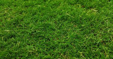 Jak na vertikutace travnatých ploch