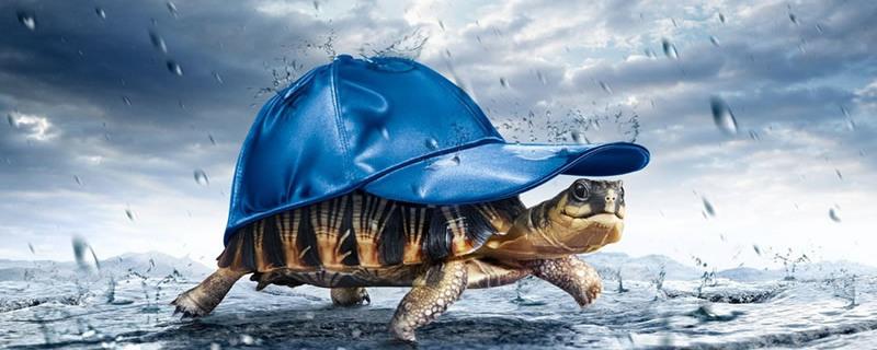 Rain-Turtle-Funny-Wallpapers-2015